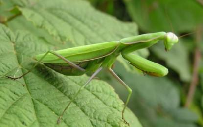 三重県立博物館 博物館教室 「採集した昆虫や植物の標本づくりに挑戦!」