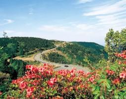 Aoyama Plateau
