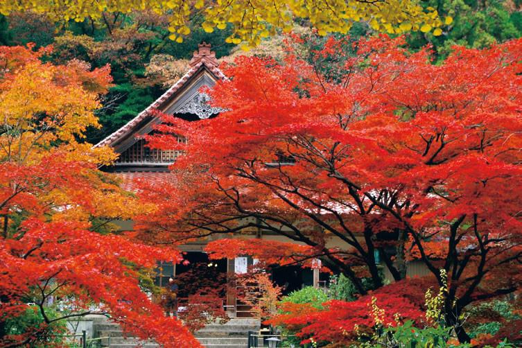 Outono em Mie