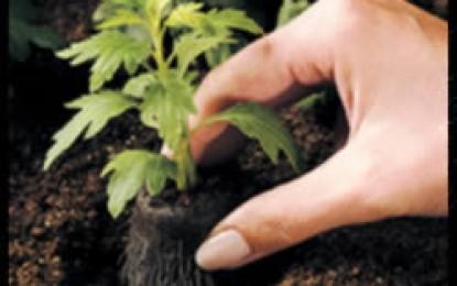 三重県が環境美化活動を支援します