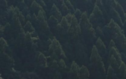 熊野古道センター「世界遺産10周年記念企画展」4月5日(土)~5月11日(日)