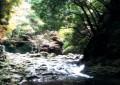 三重県の観光名所を紹介します