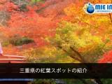 Locais na província de Mie para apreciar as folhas de outono